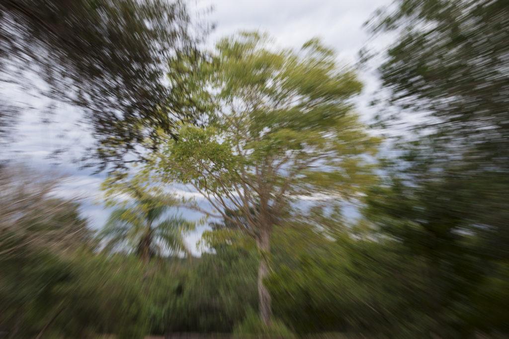 Jungle d'Iguazu, Argentine