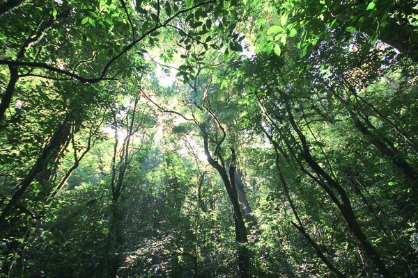 Forêt primaire de Monteverde, Costa Rica