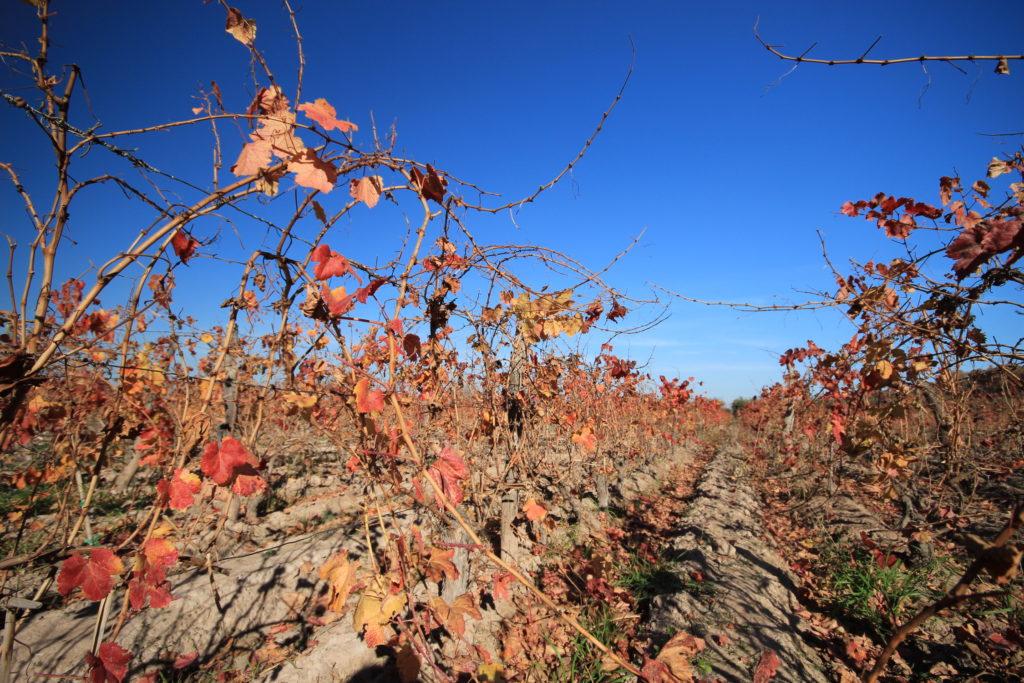 Vignes de Mendoza à l'automne, Argentine