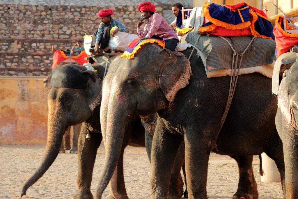 Eléphants à Jaipur, Inde