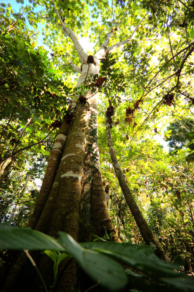 Jungle, Amazonie, Pérou
