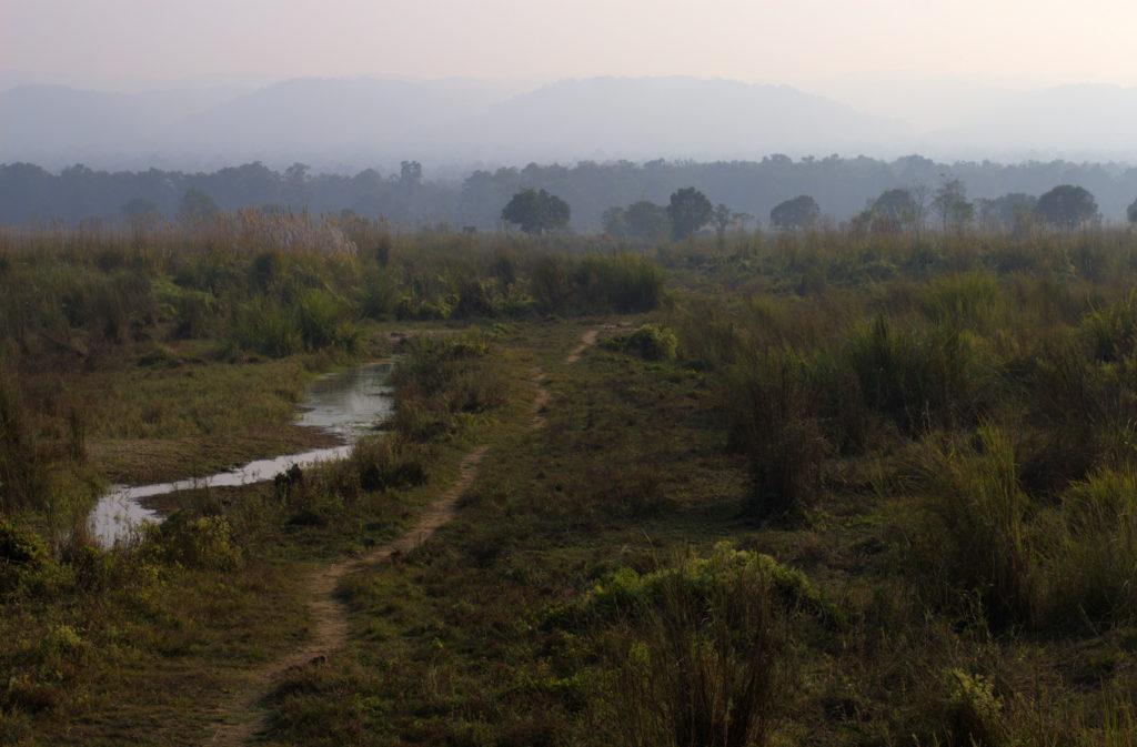 Paysage de brousse de Chitwan, Népal