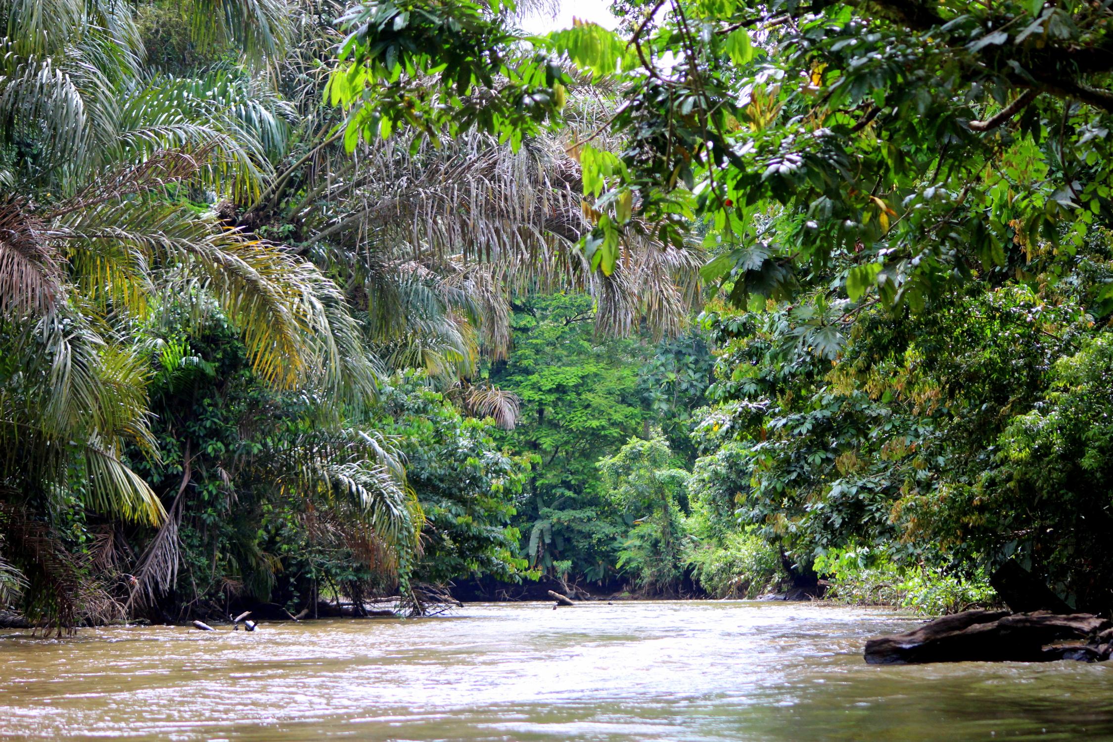 Dans les canaux de Tortuguero, petite Amazonie, Costa Rica