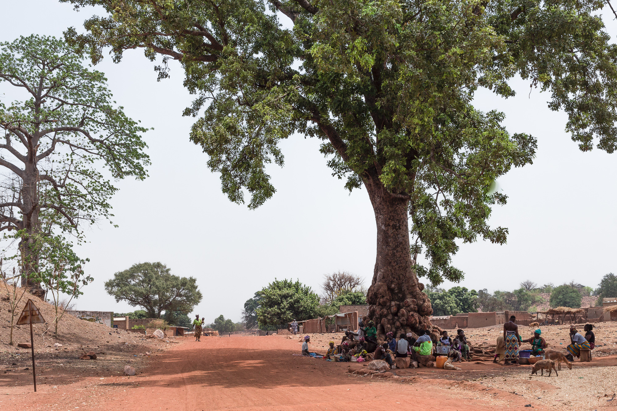Attroupement sous un caïlcedrat, ombre, arbre, piste rouge, Burkina Faso