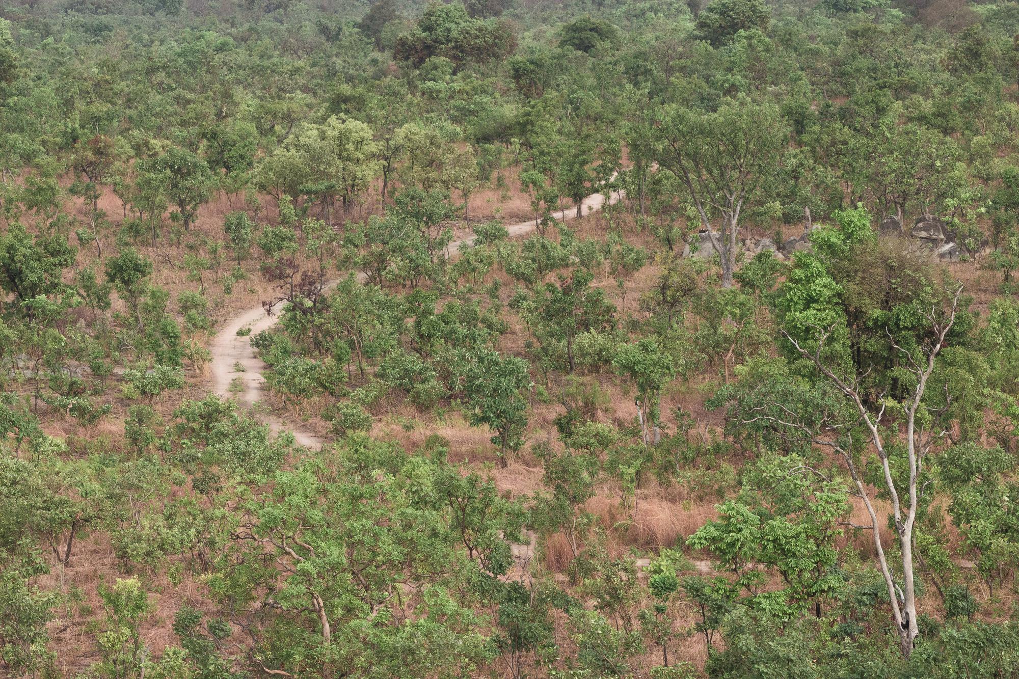Brousse de la réserve de Nazinga, Burkina Faso