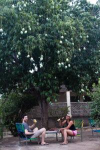 Brakina sous un manguier, hôtel Hala, Gaoua, Burkina Faso