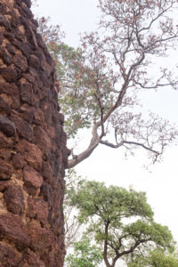 Arbre poussant sur les ruines de Loropeni, Burkina Faso