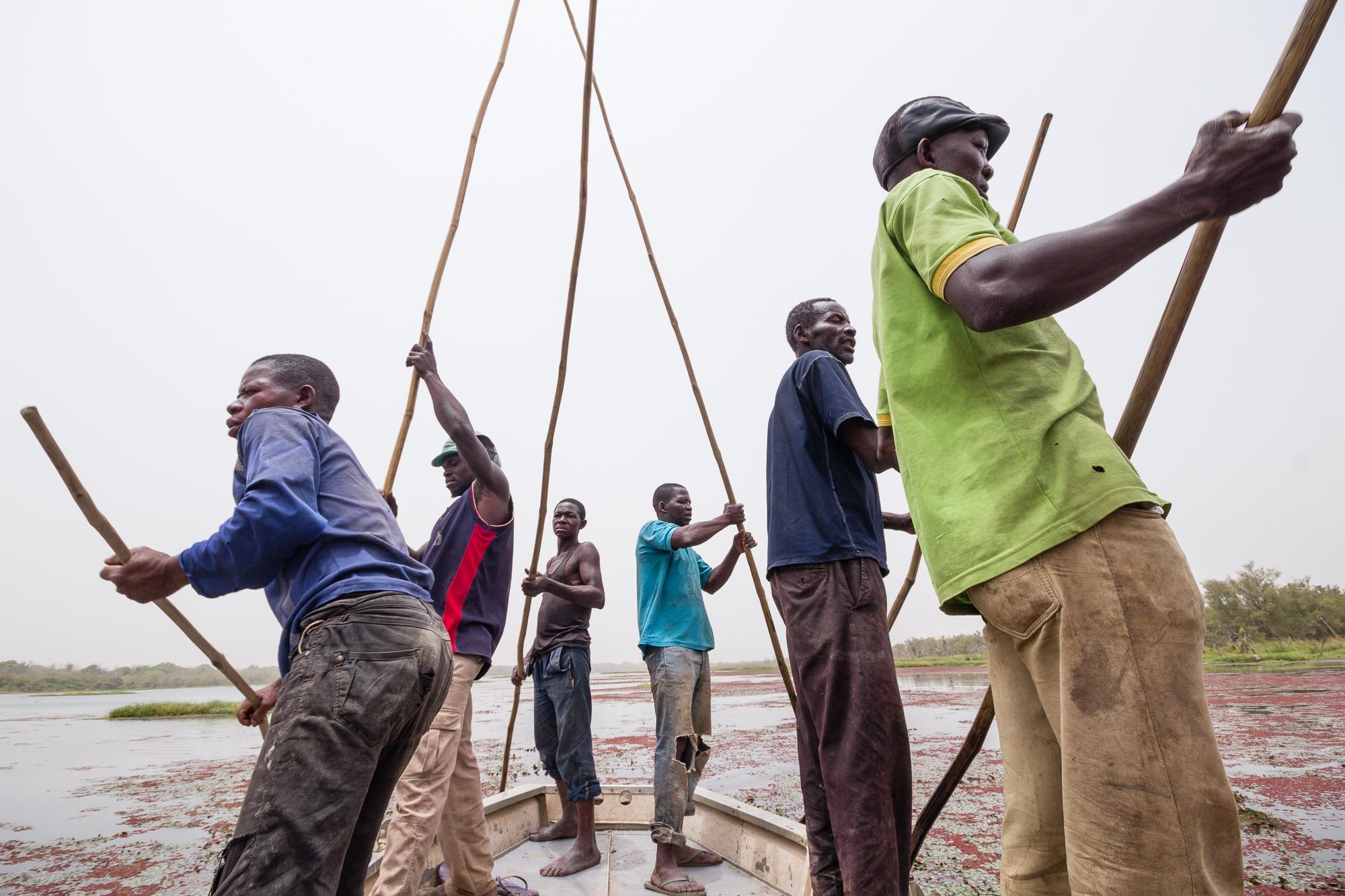 Bateliers poussant la pirogue de leurs longues perches, mare de Bala, Burkina Faso