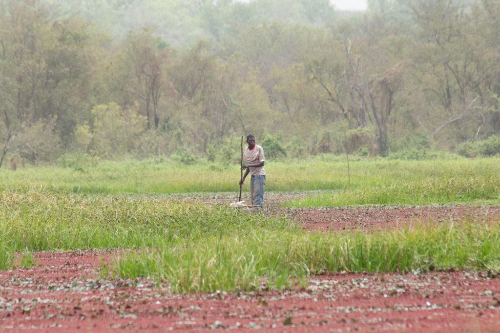 Pêcheur en pirogue avançant au milieu des algues rouges et de la végétation de la mare aux hippopotames de Bala, Burkina Faso