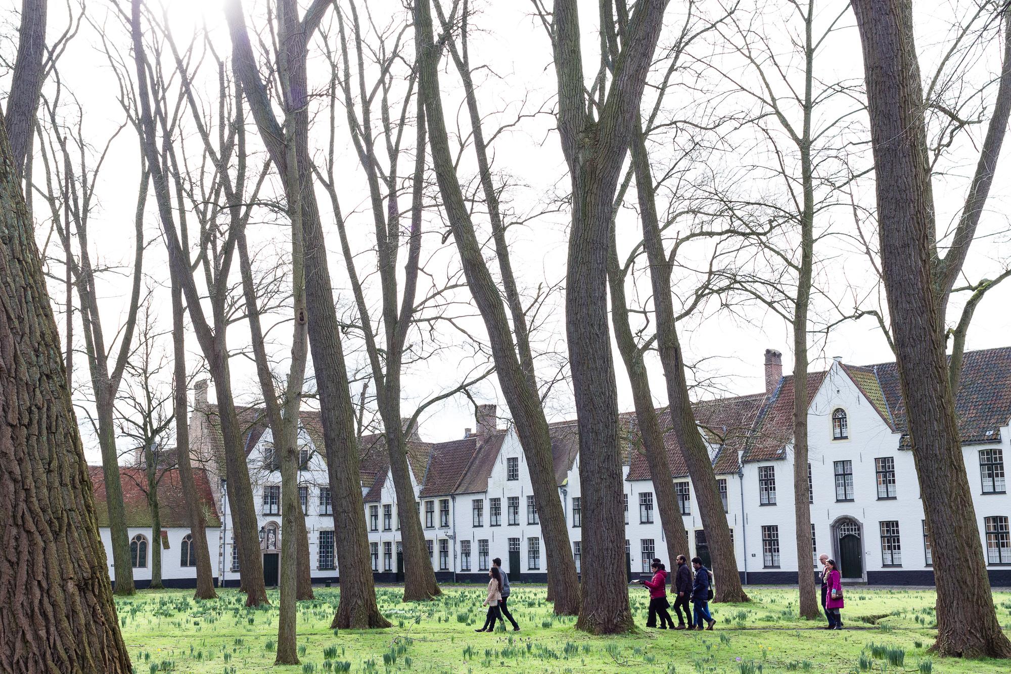 Place arborée du Béguinage de Bruges, Belgique