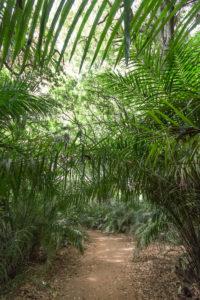 Végétation luxuriante dans la forêt de Kou, Burkina Faso