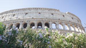 Lauriers blancs devant le Colisée, Rome Italie