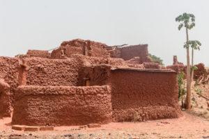 Papayer et case recouverte de crépi du village traditionnel Bobo de Koumi, Burkina Faso