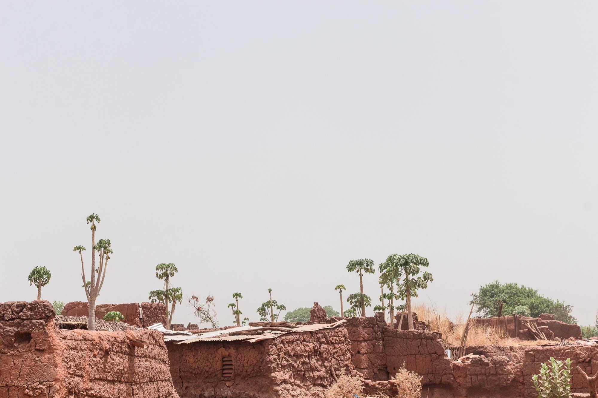 Papayers et cases recouvertes de crépi, village traditionnel Bobo de Koumi, Burkina Faso