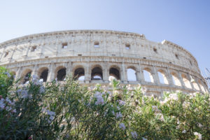 Colisée et lauriers blancs, Rome, Italie