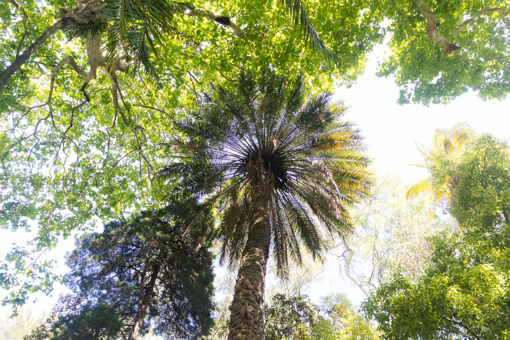 Voûte végétale, jardin botanique de l'université, Lisbonne, Portugal