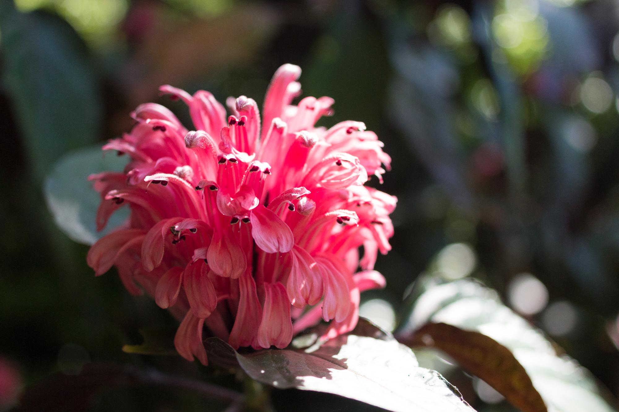 Fleur du jardin botanique, Lisbonne, Portugal