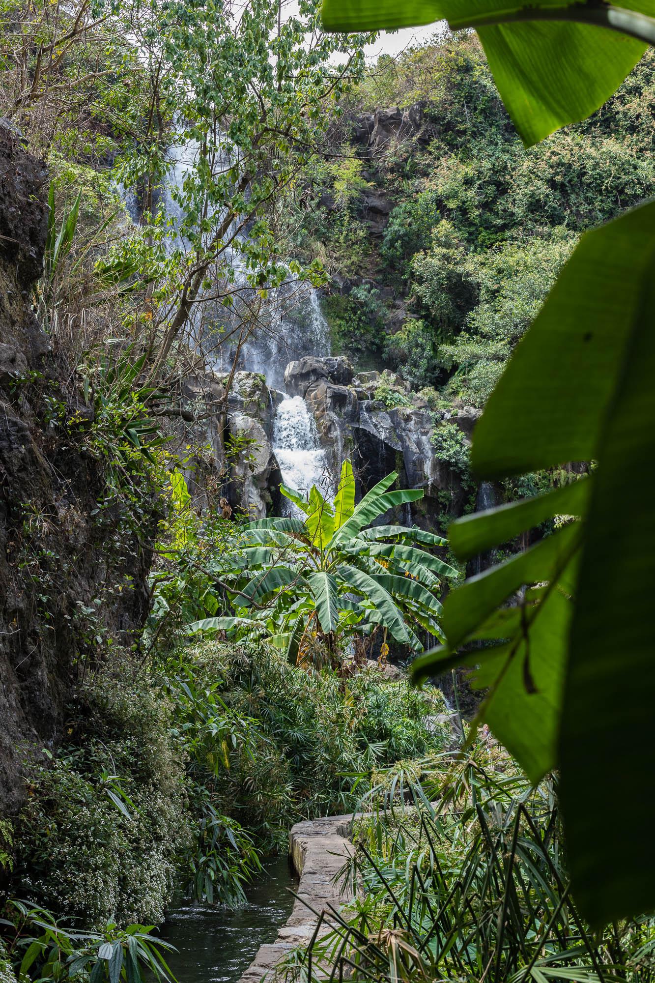 Végétation tropicale à la cascade des AIgrettes, 3 bassins, La Reunion