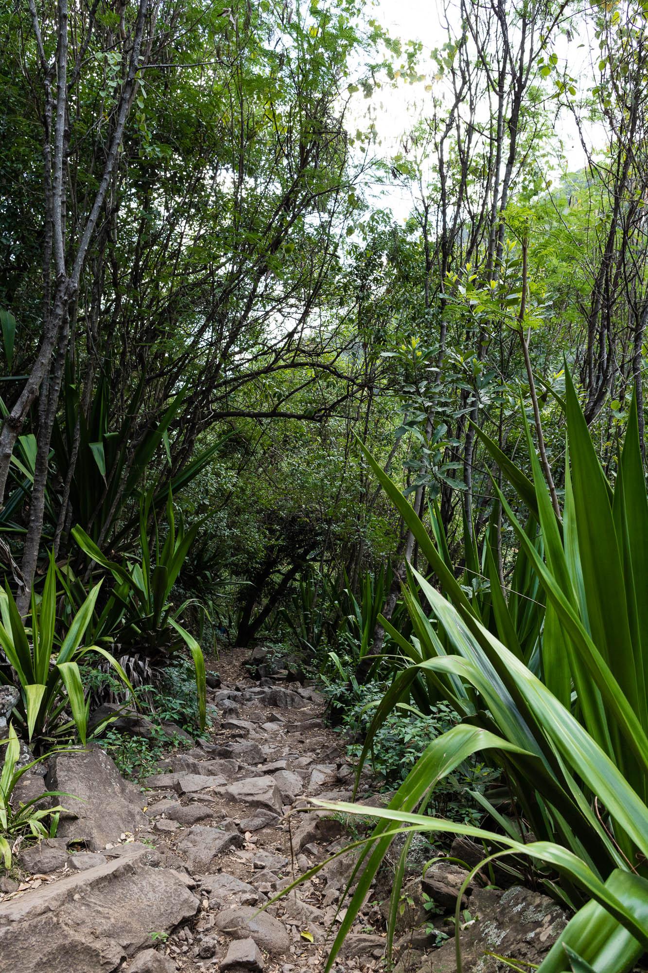 Végétation chemin Dassy, Réunion