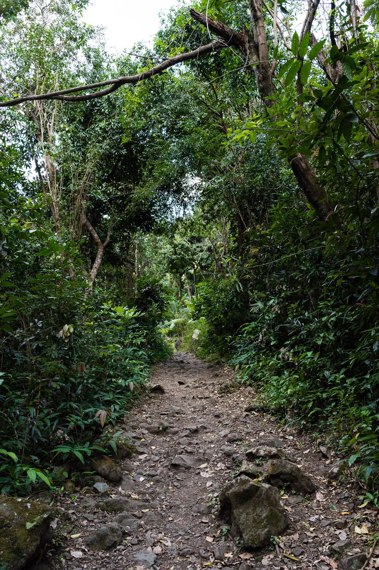 Chemin Dassy, Réunion