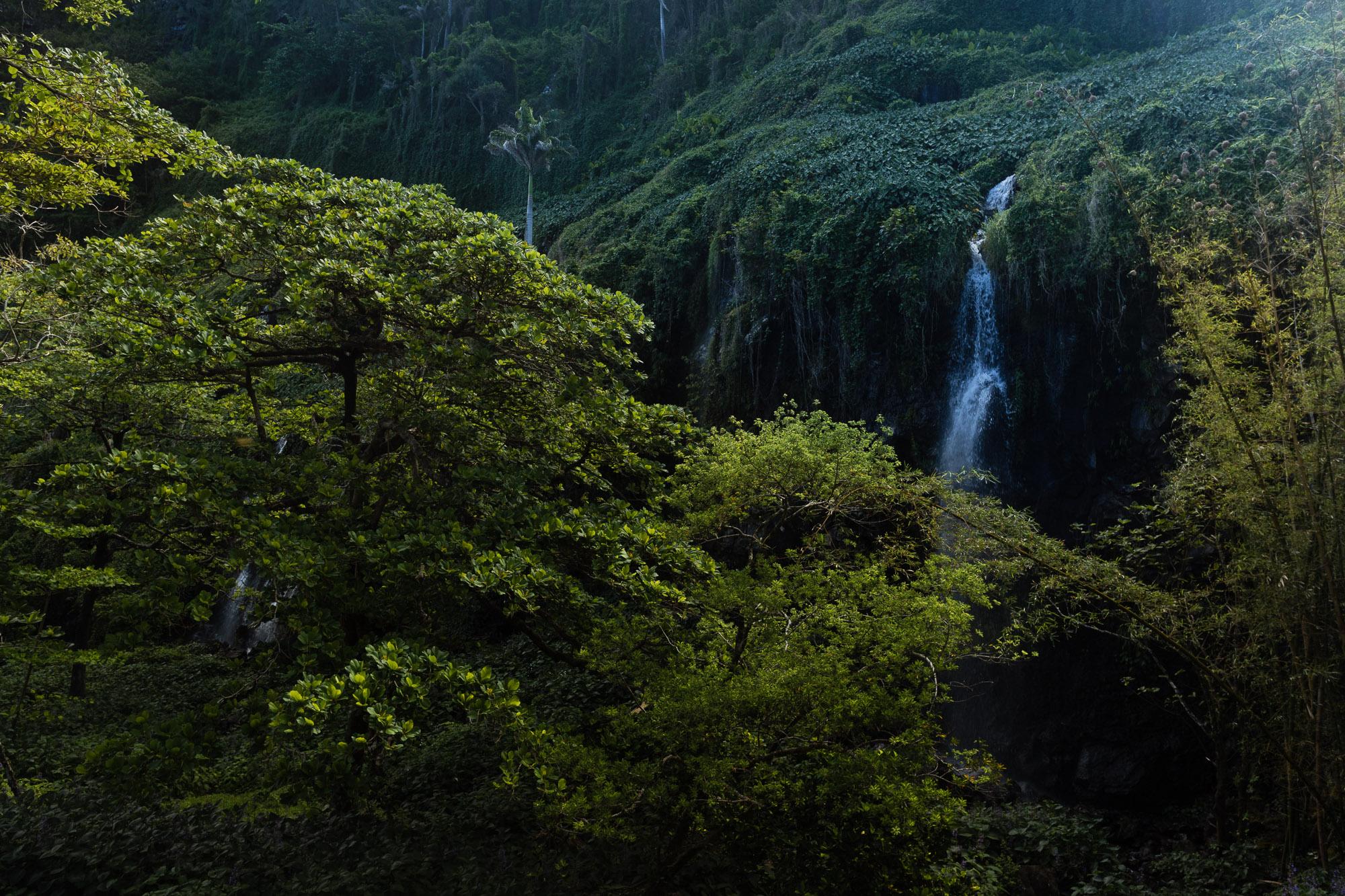 cascades dans la végétation, anse des cascades, la réunion