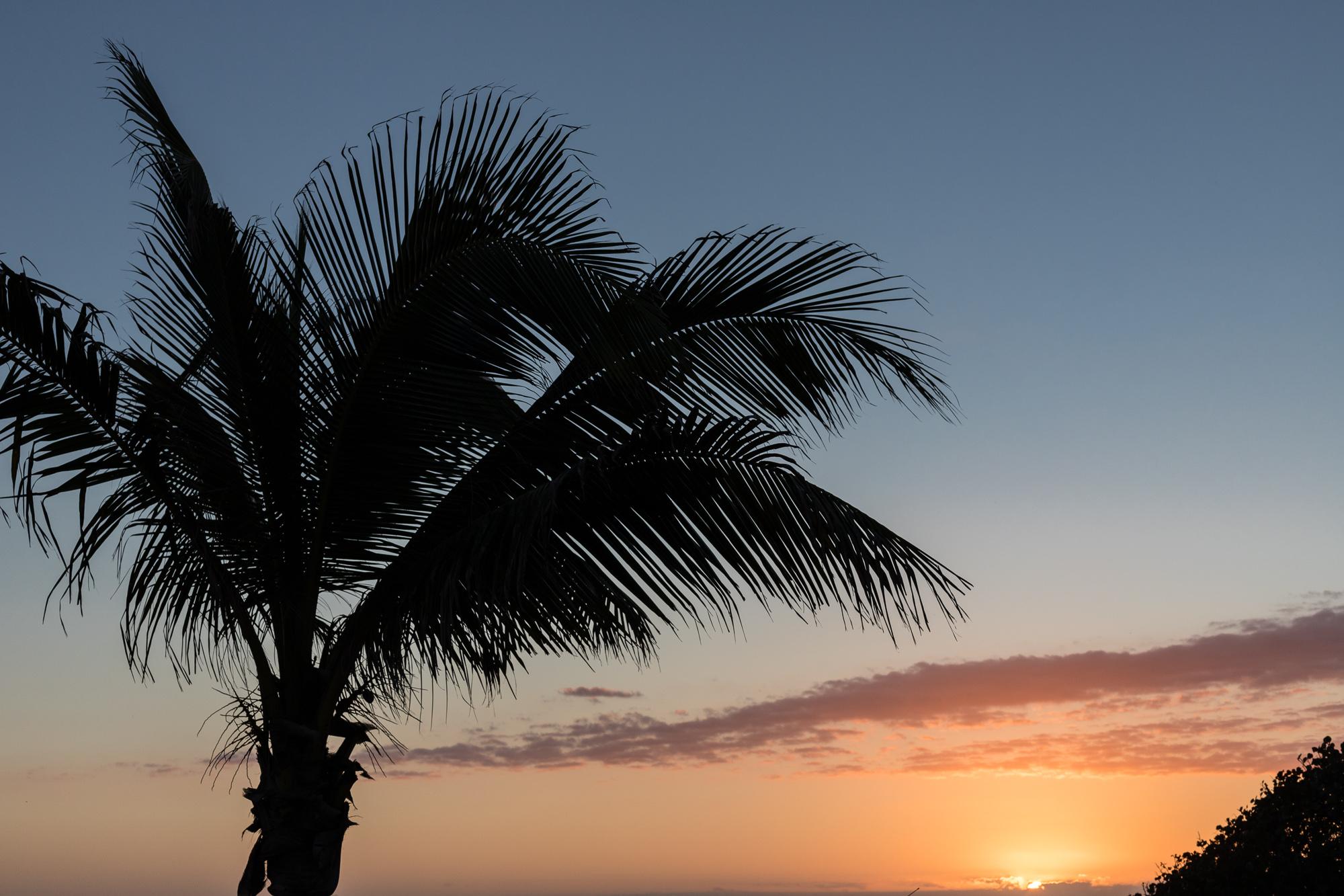 Palmier au coucher du soleil, la réunion