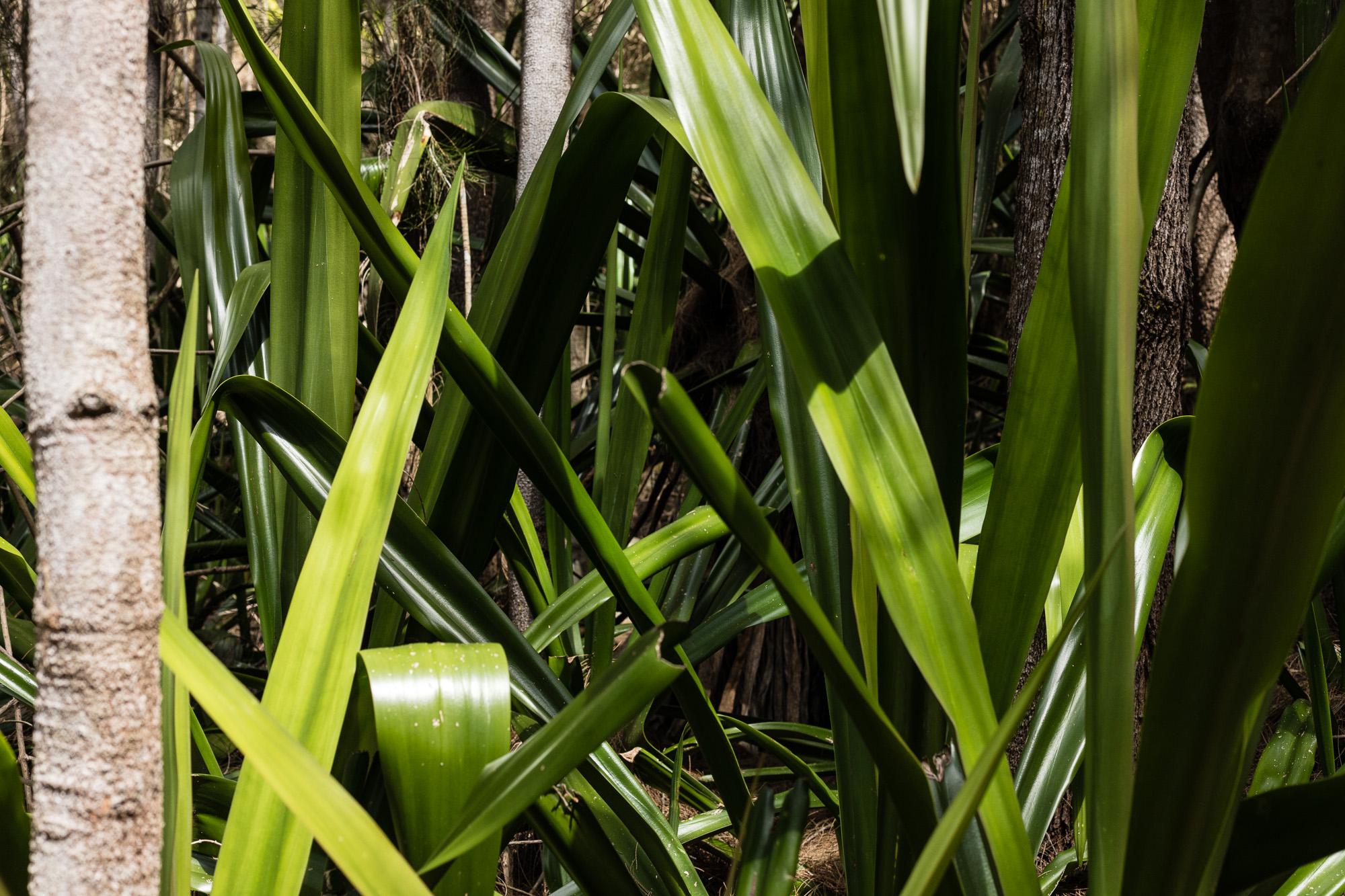 chocas verts, mafate