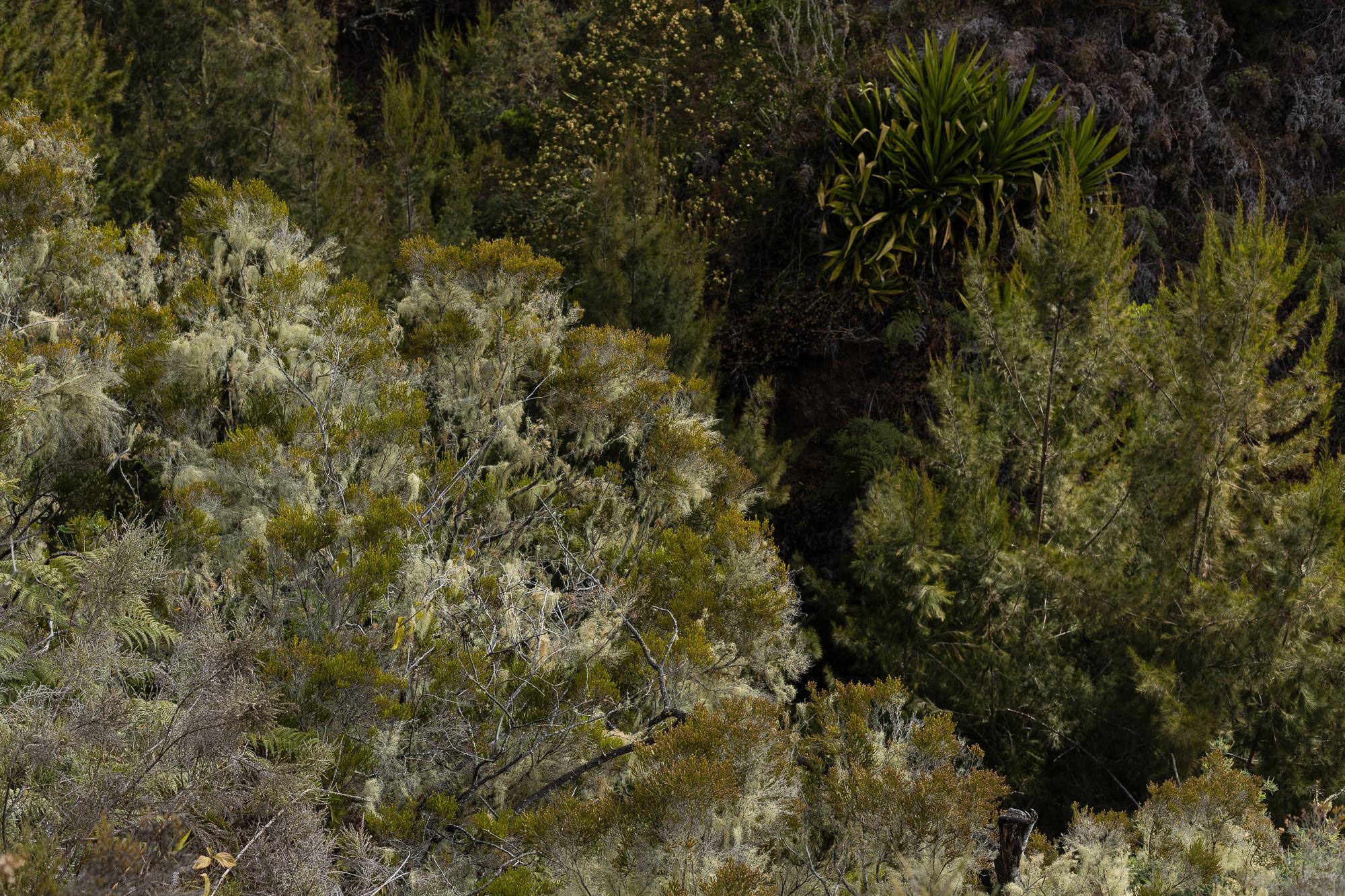 végétation mafate