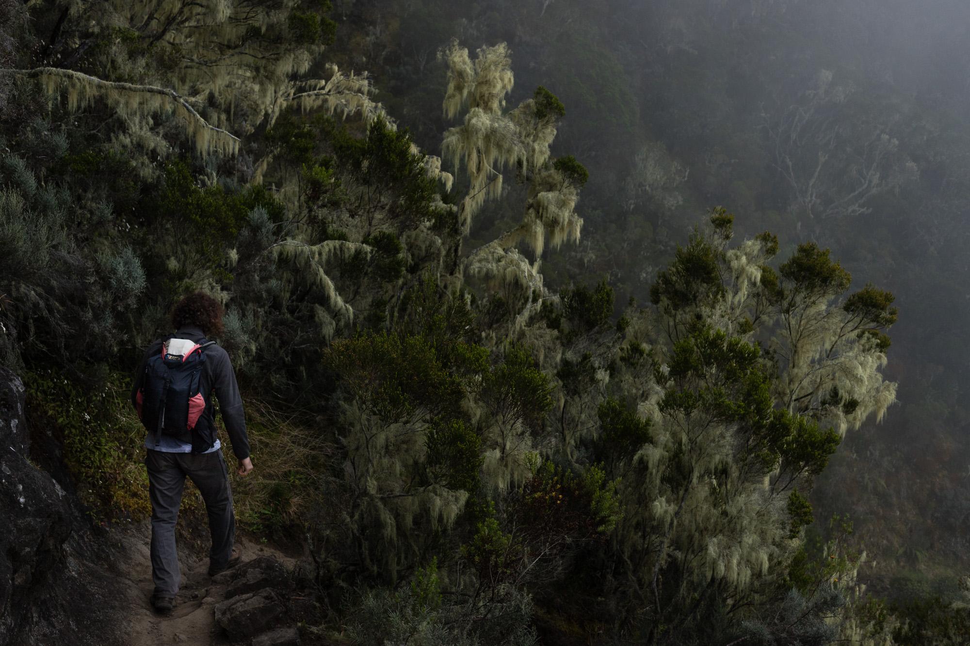arbre lichen mafate