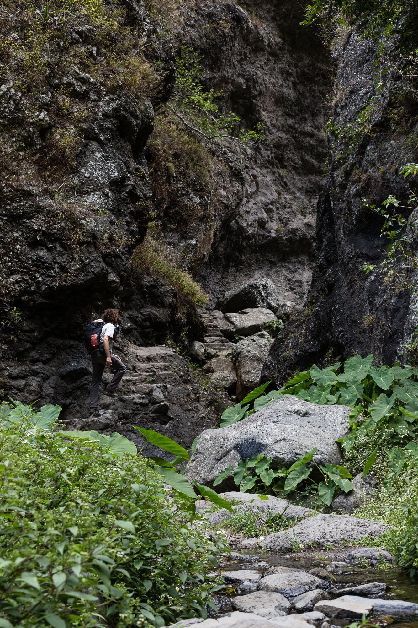 Randonneur au mileu de la végétation de Mafate, montant les marches de la canalisations des Orangers, La Réunion
