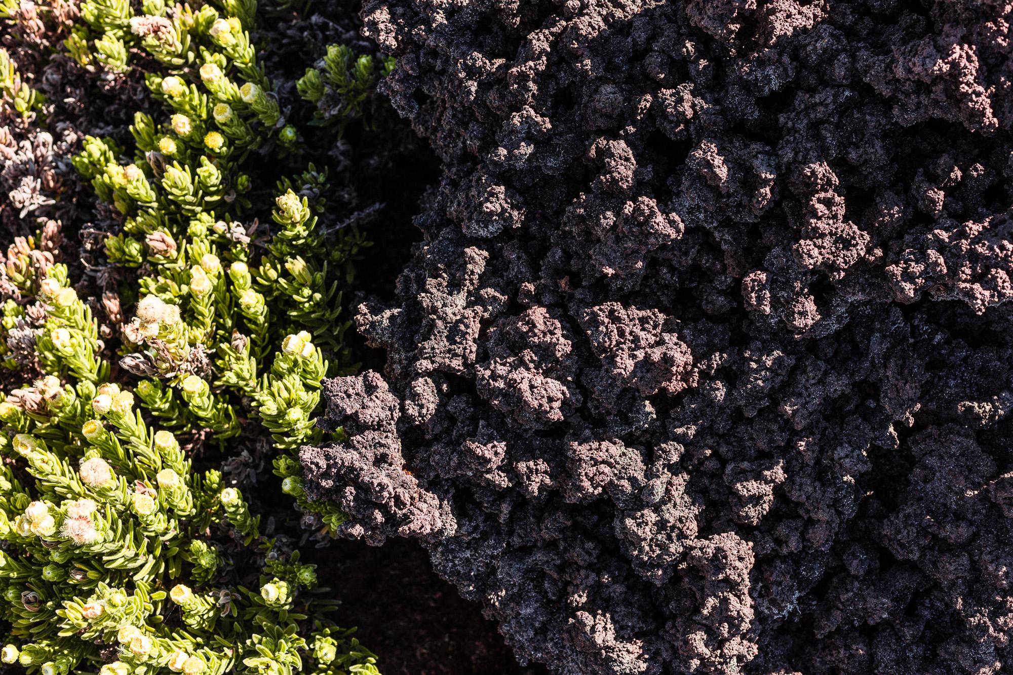 texture lave et végétation piton de la fournaise