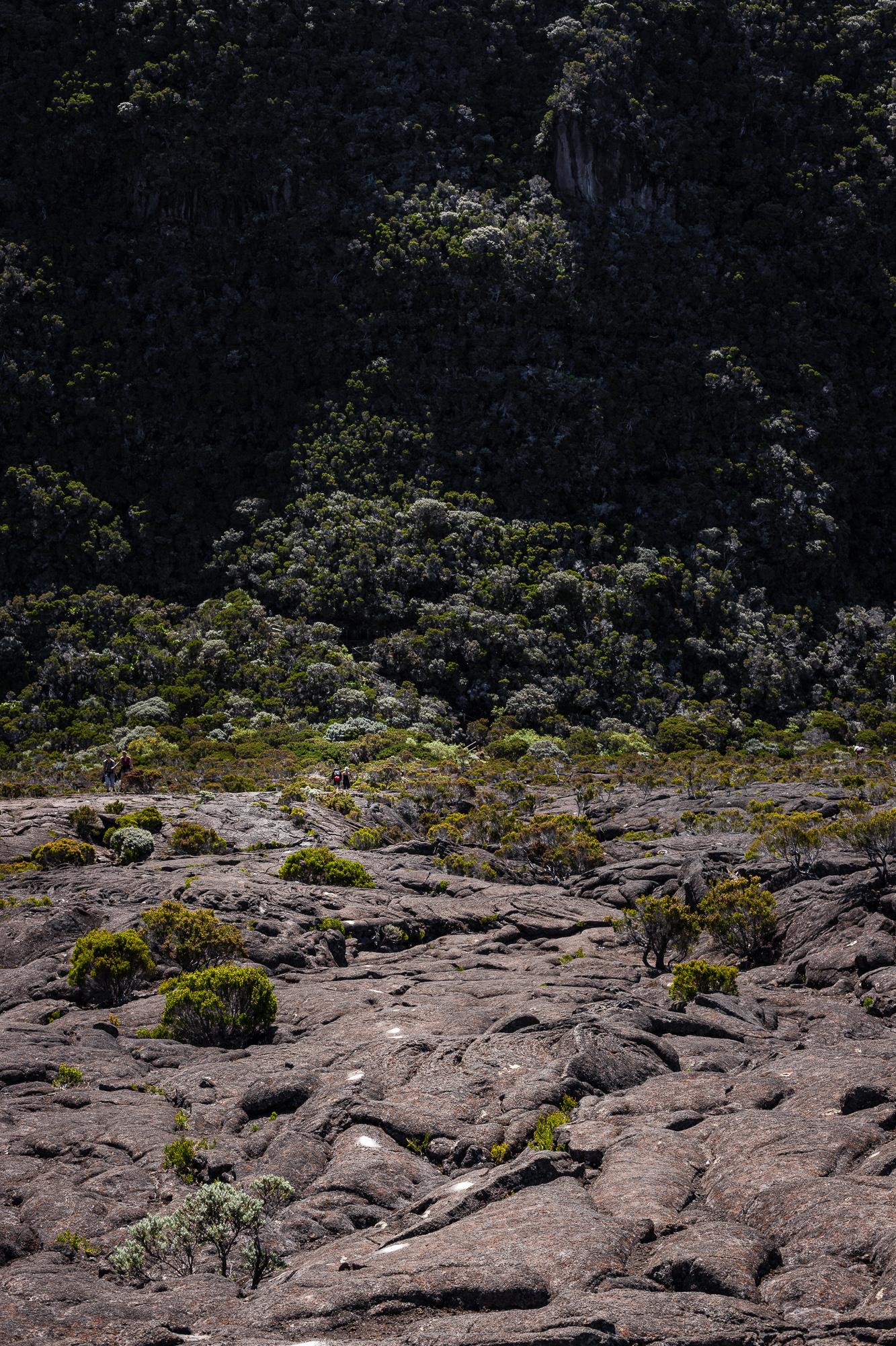végétation remparts enclos piton de la fournaise