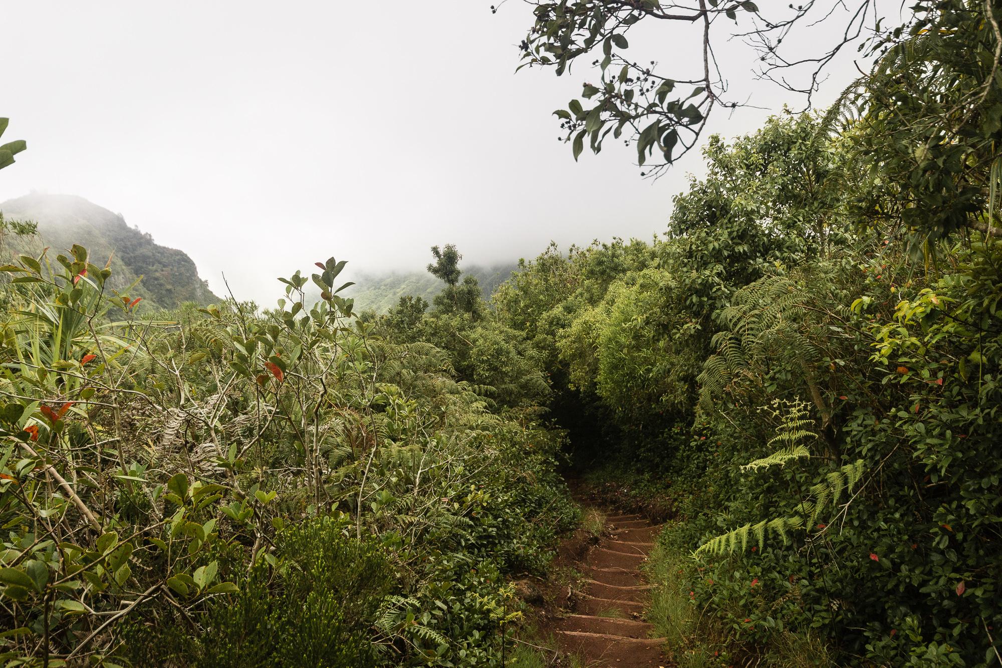 végétation tropicale réunion