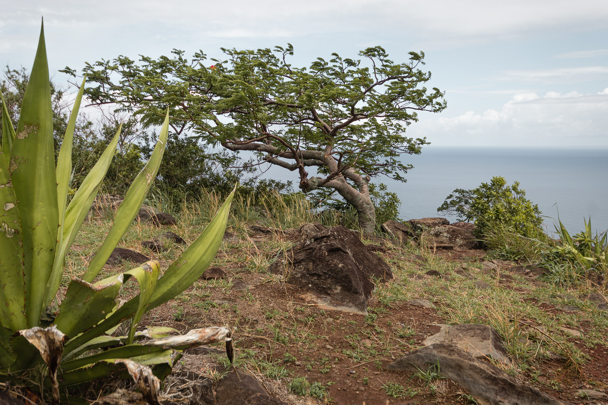 arbre modelé par le vent