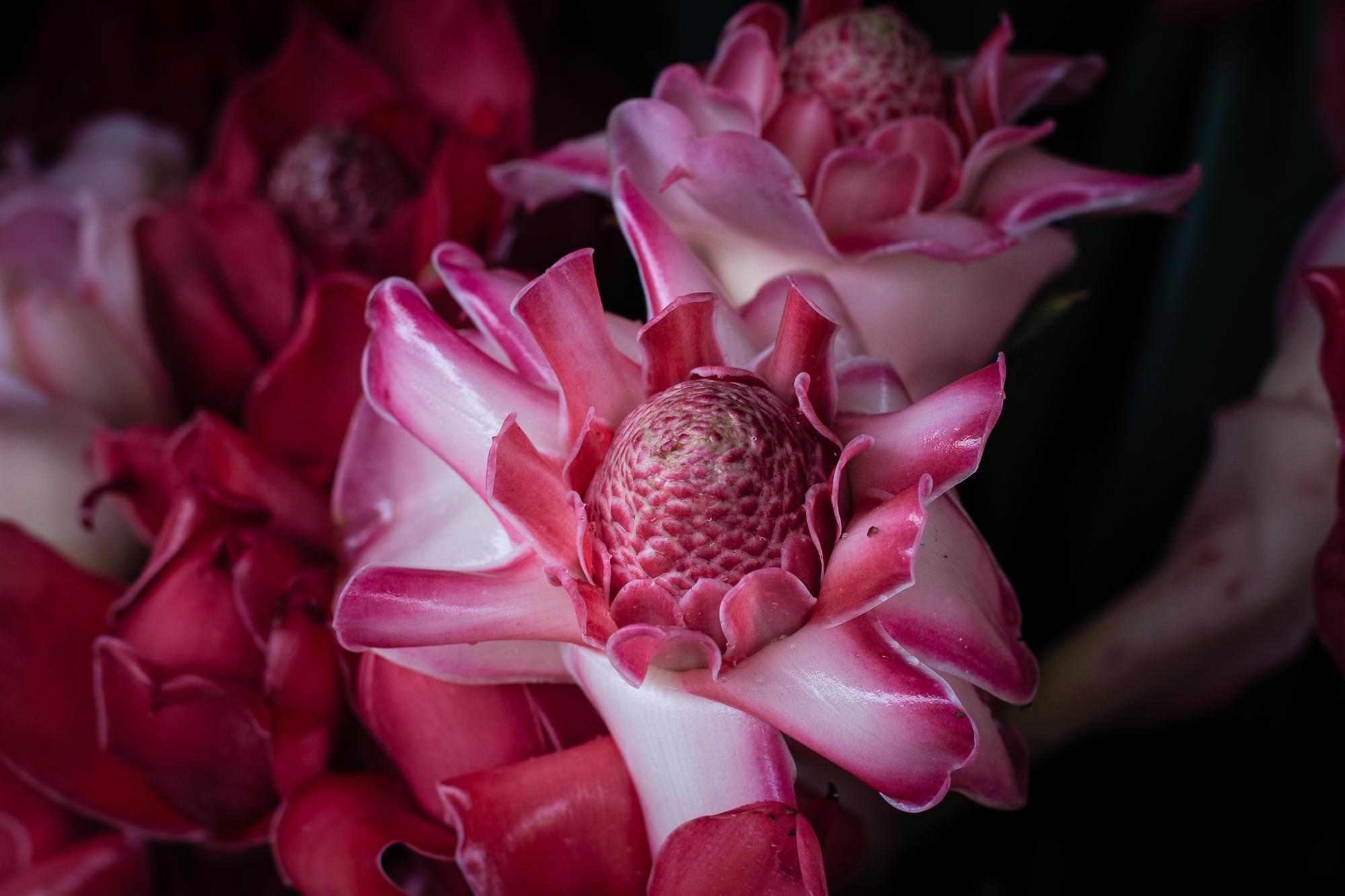 rose de pcelaine réunion