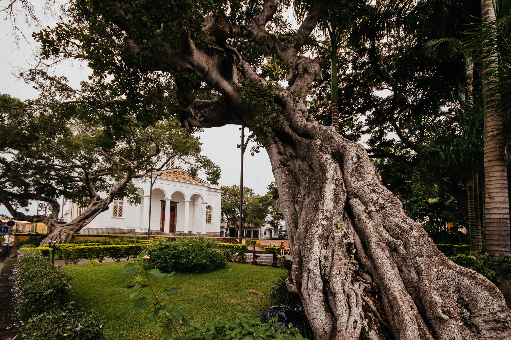 arbre cathédrale saint denis reunion