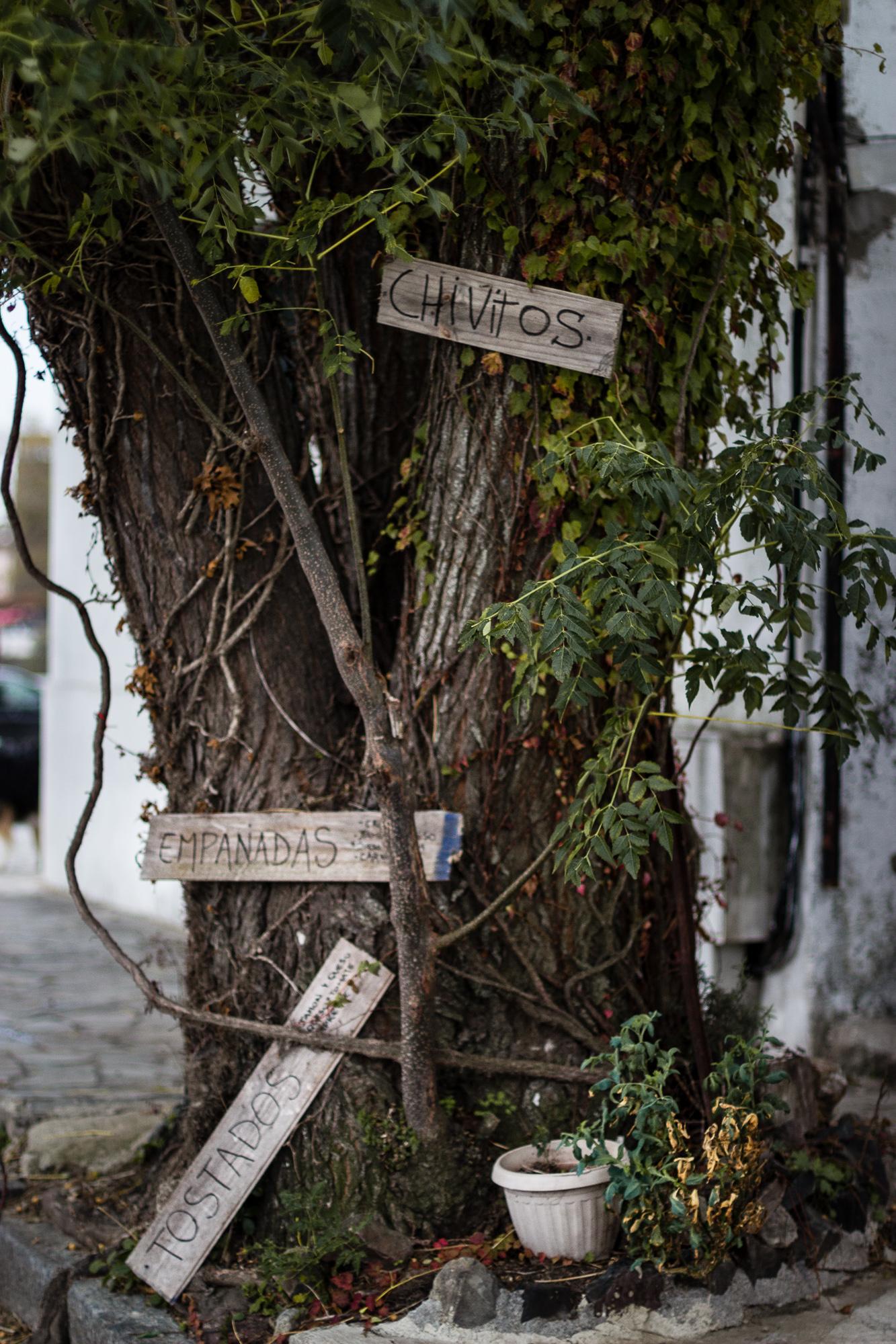 arbre panneaux colonia del sacramento