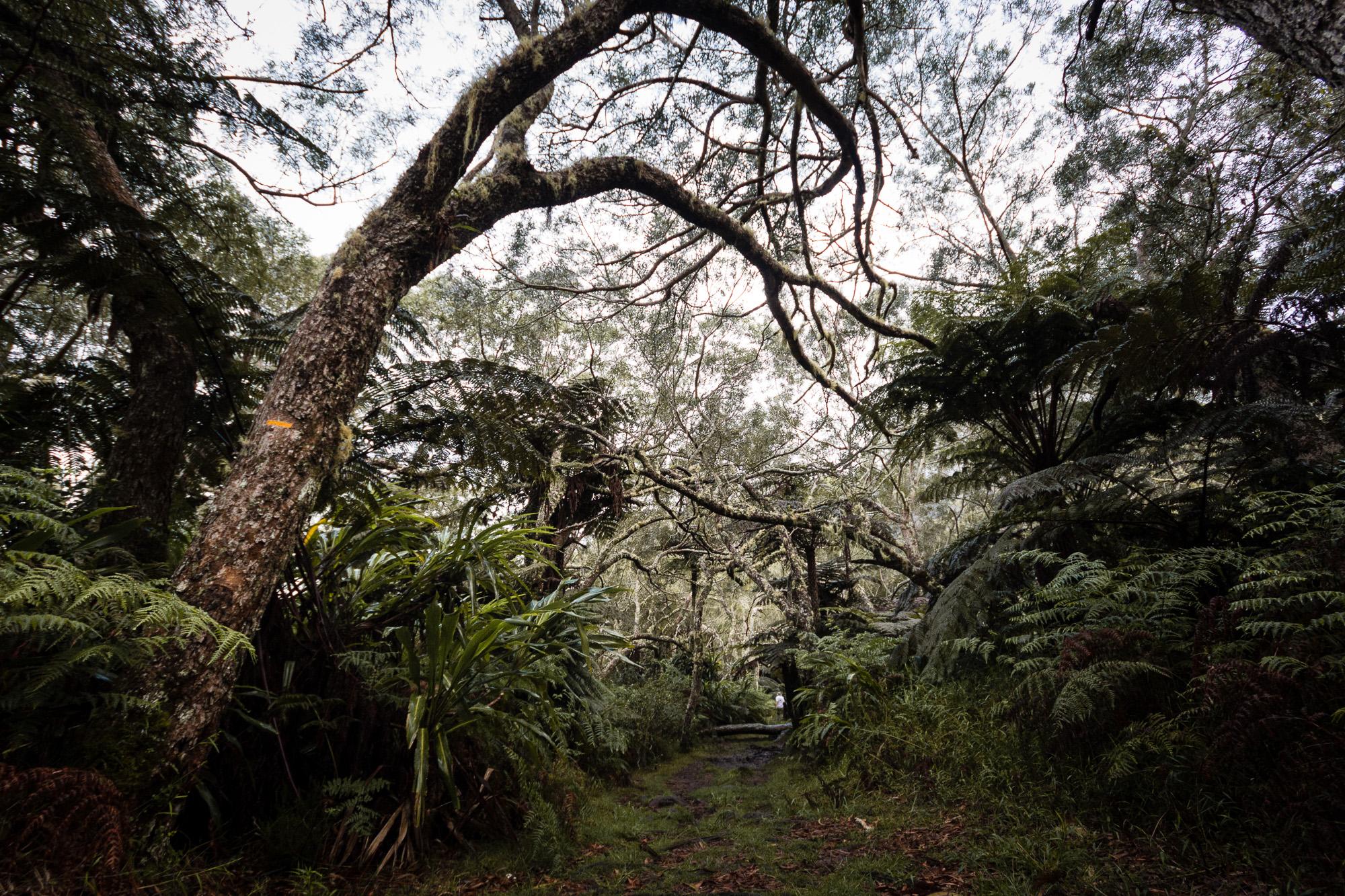 arbre griffu foret de belouve