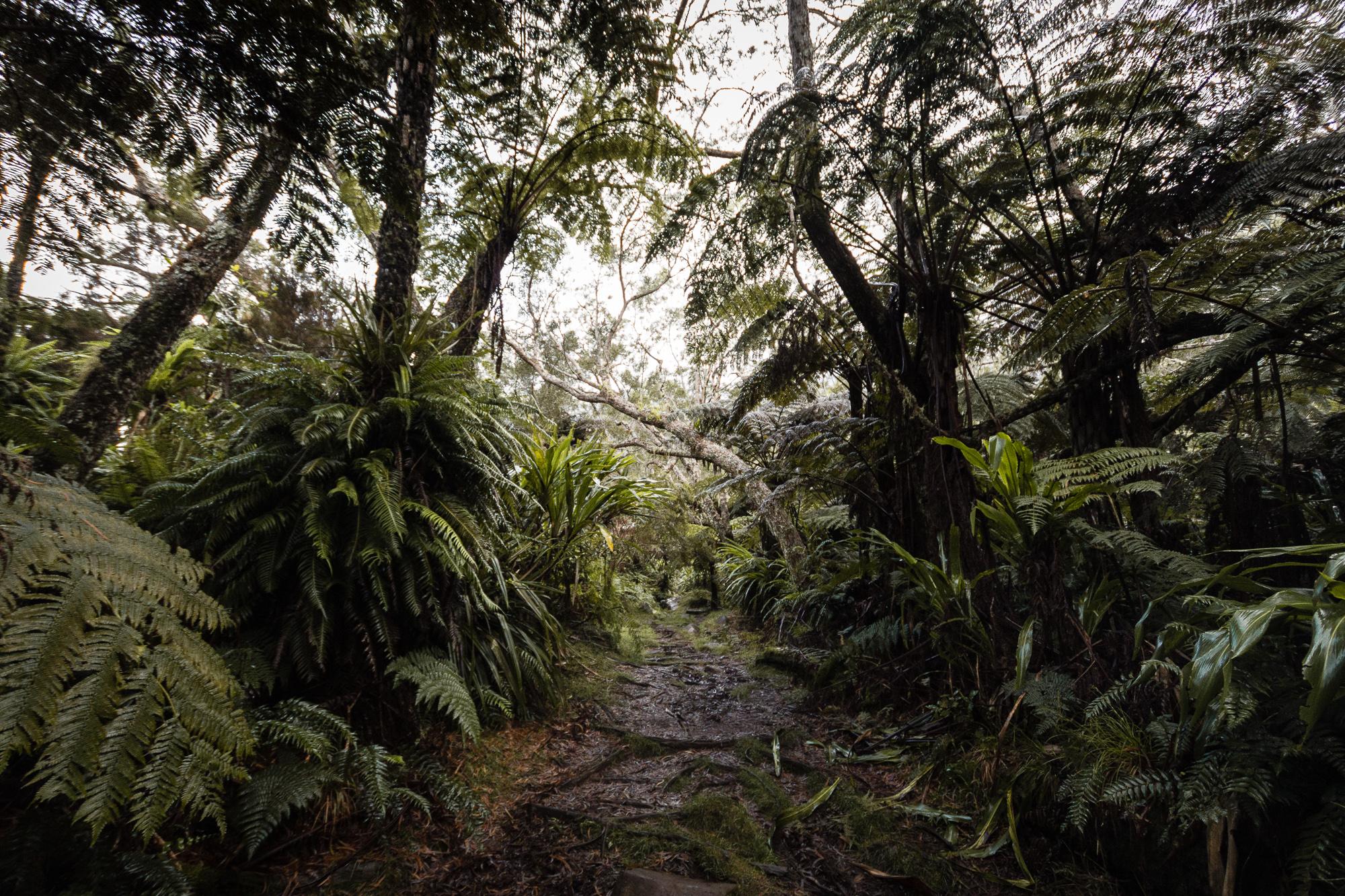 forêt de Bélouve