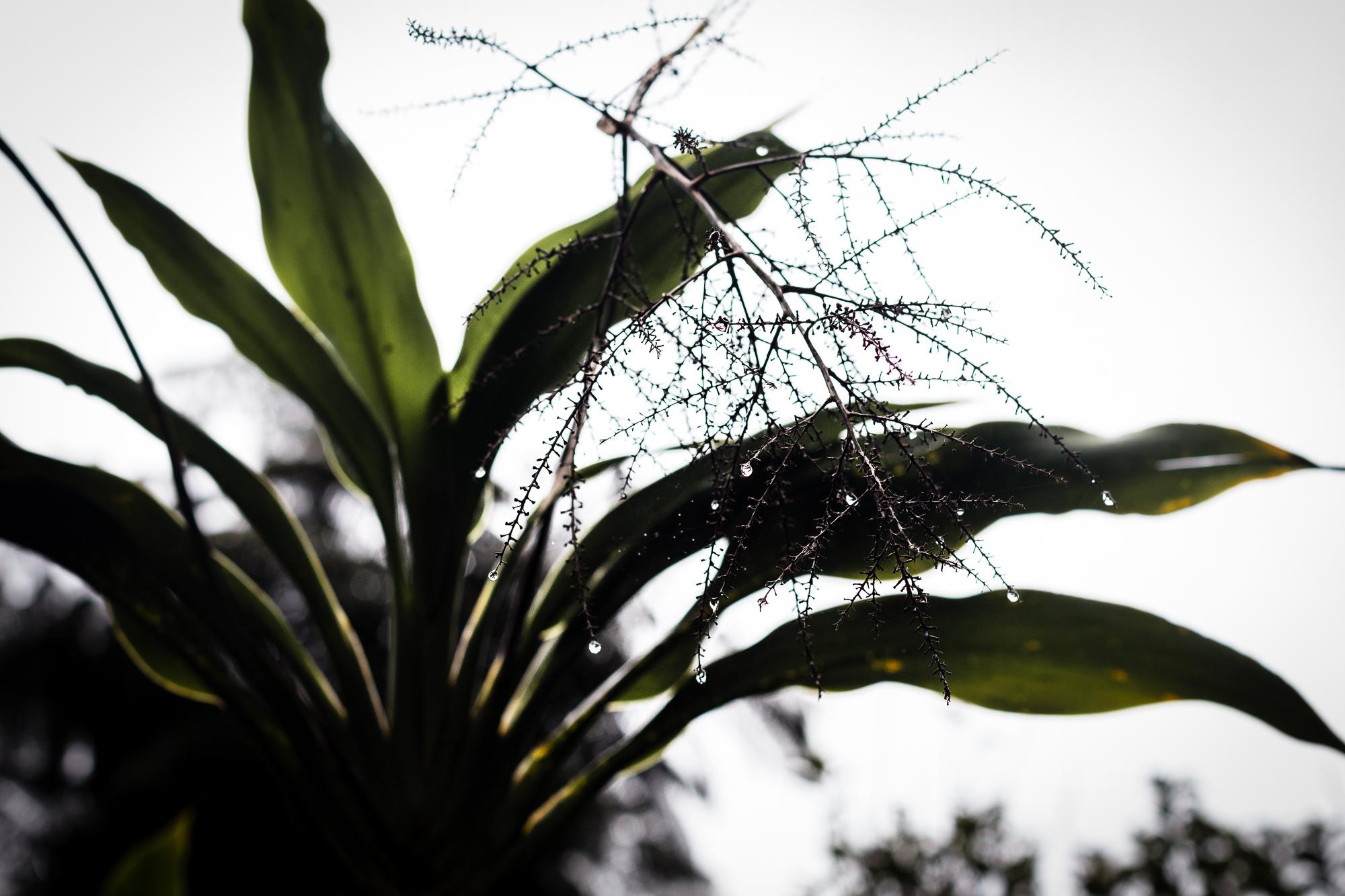 humidité belouve
