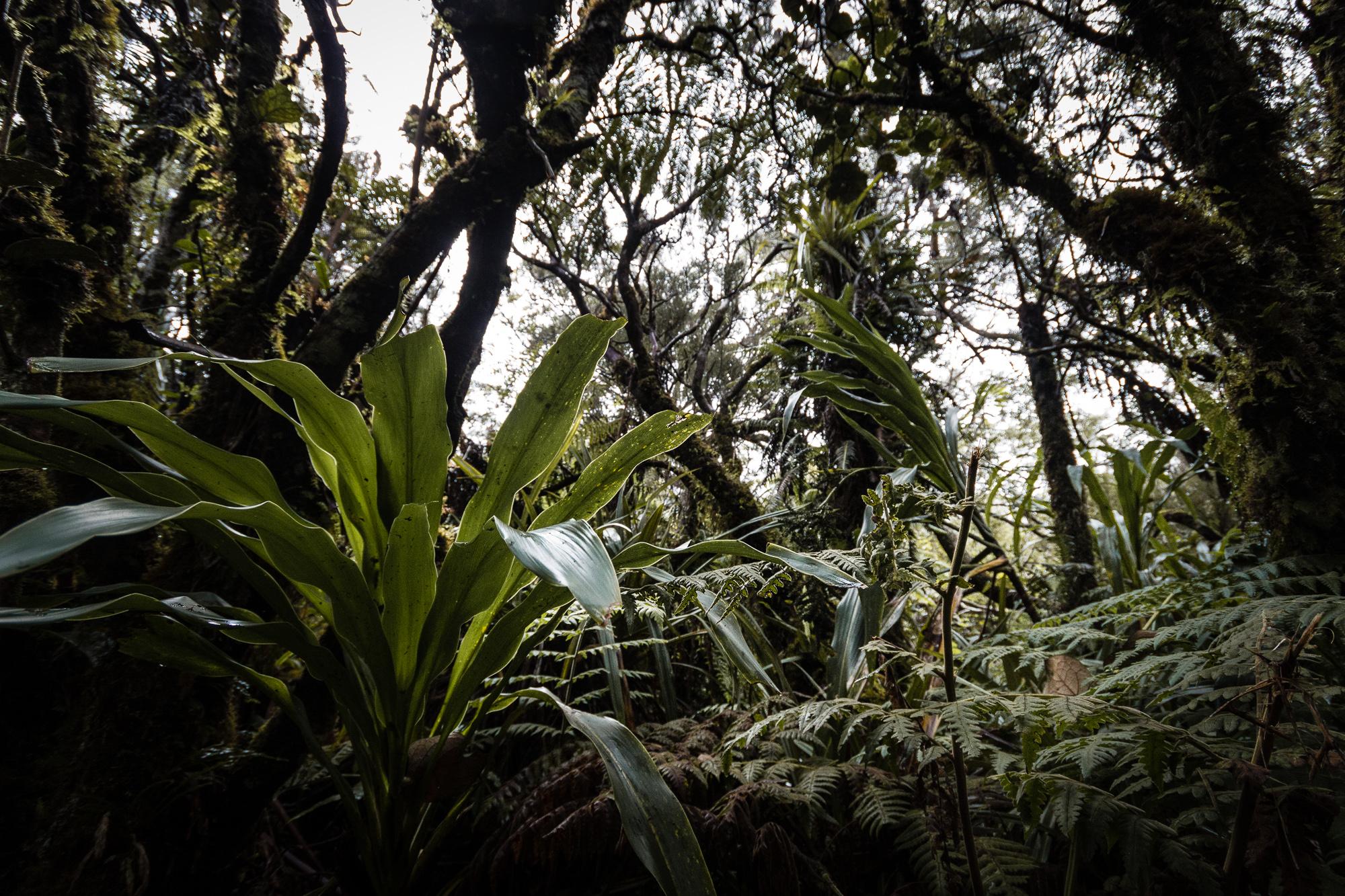 biodiversité foret belouve