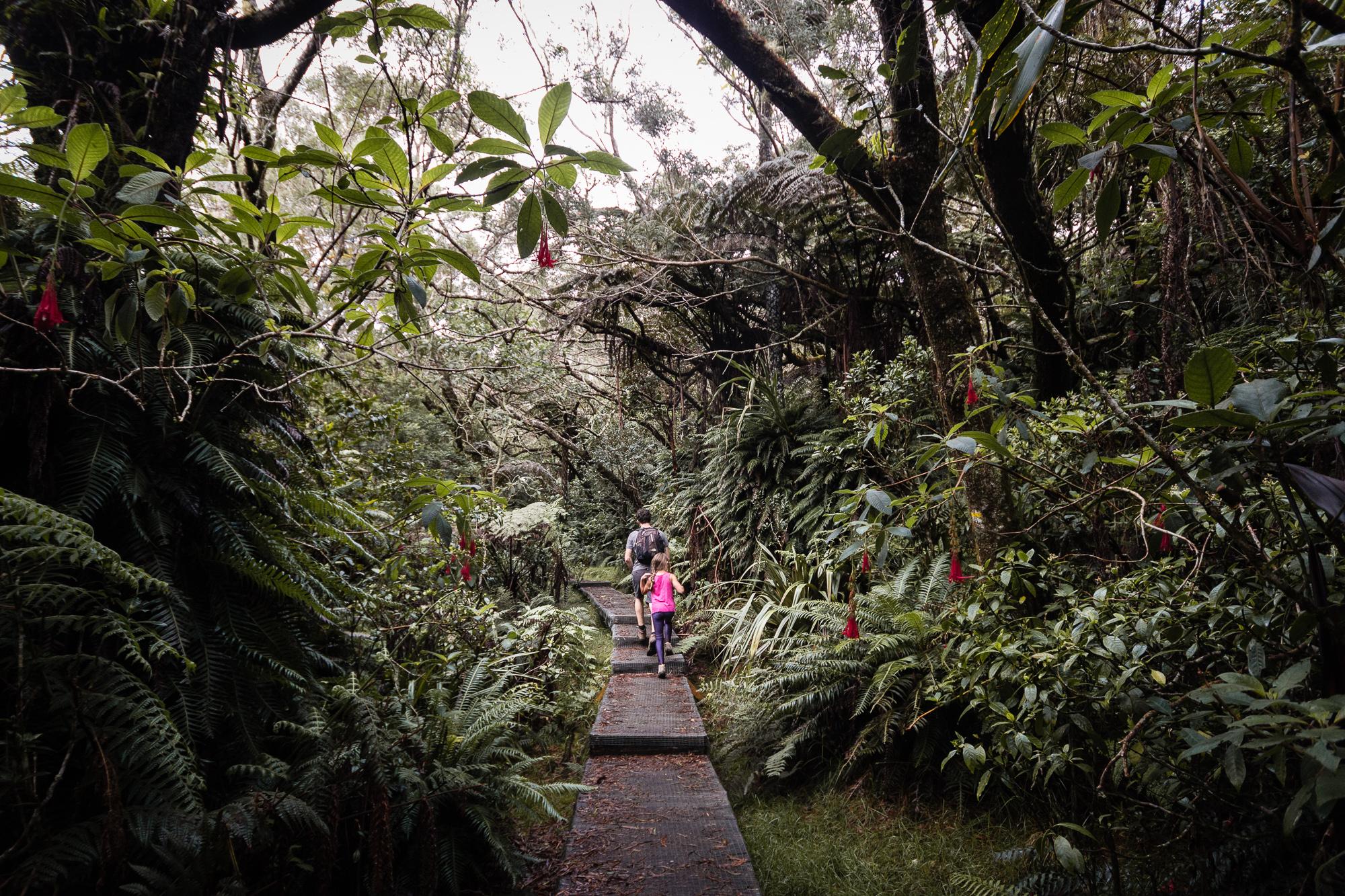jungle belouve