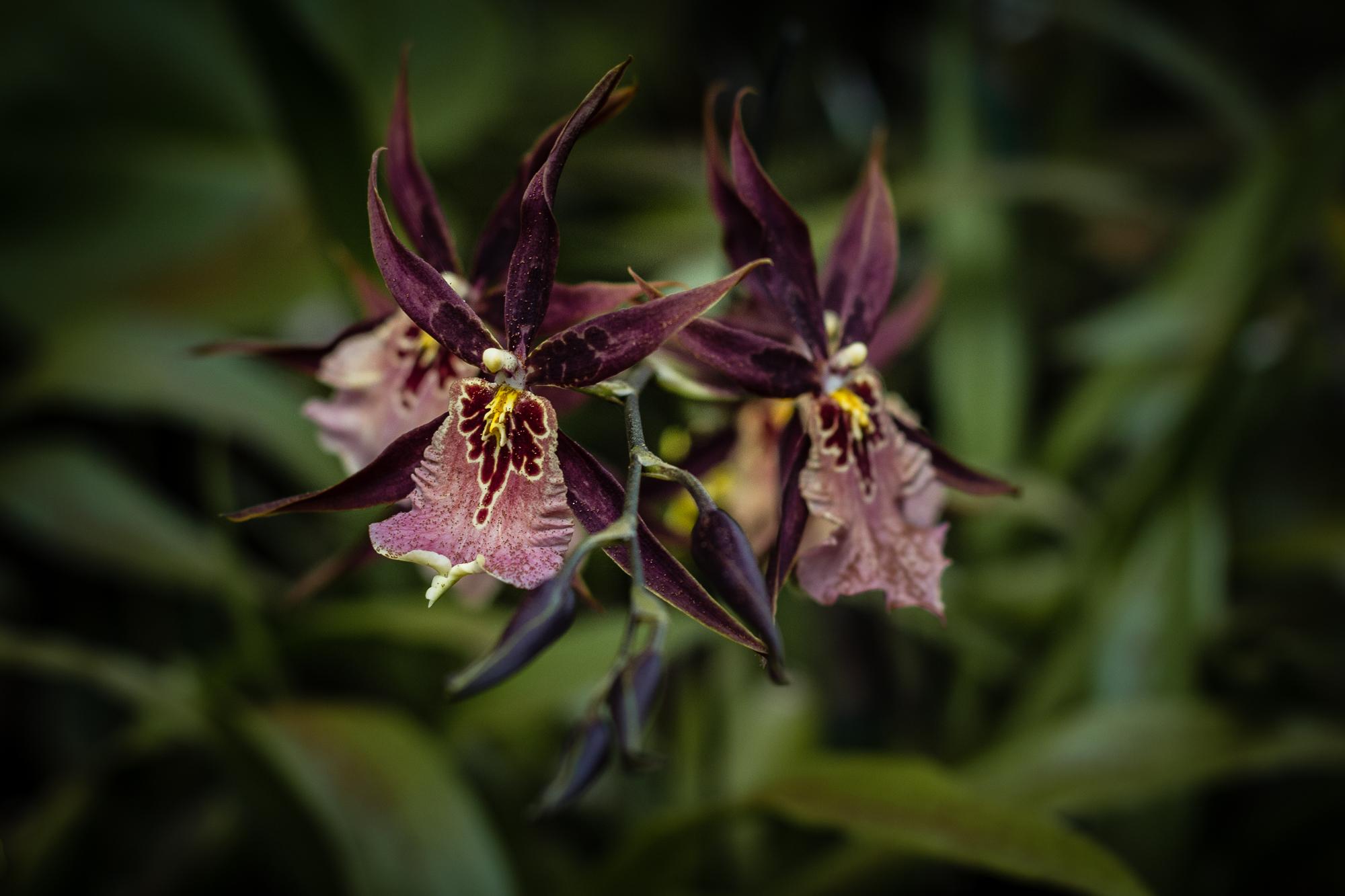 orchidée jardin maison folio hell-bourg