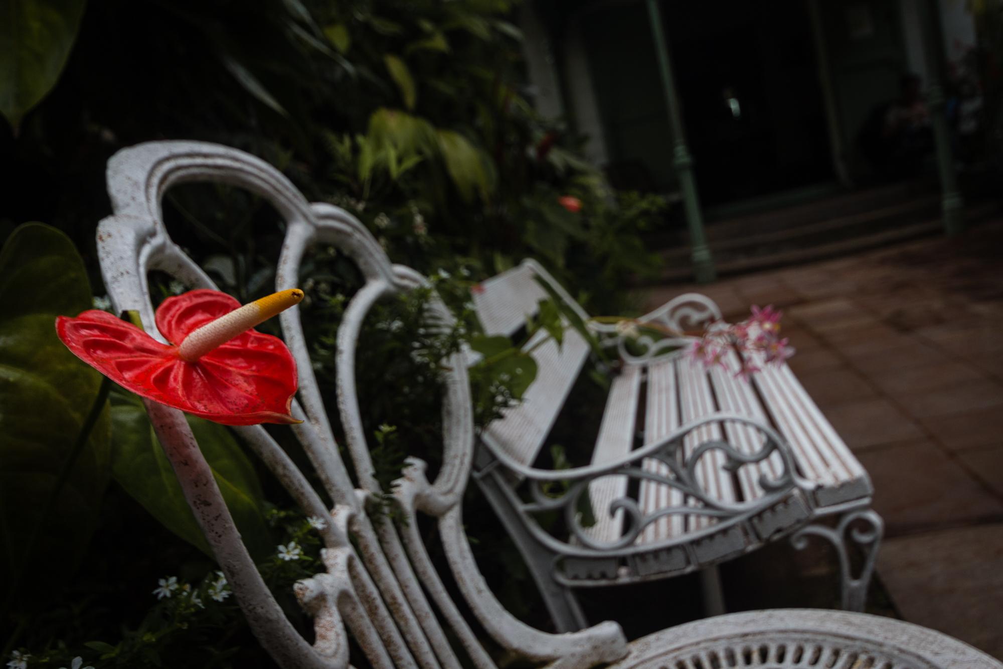 fleur rouge gros pistil maison folio