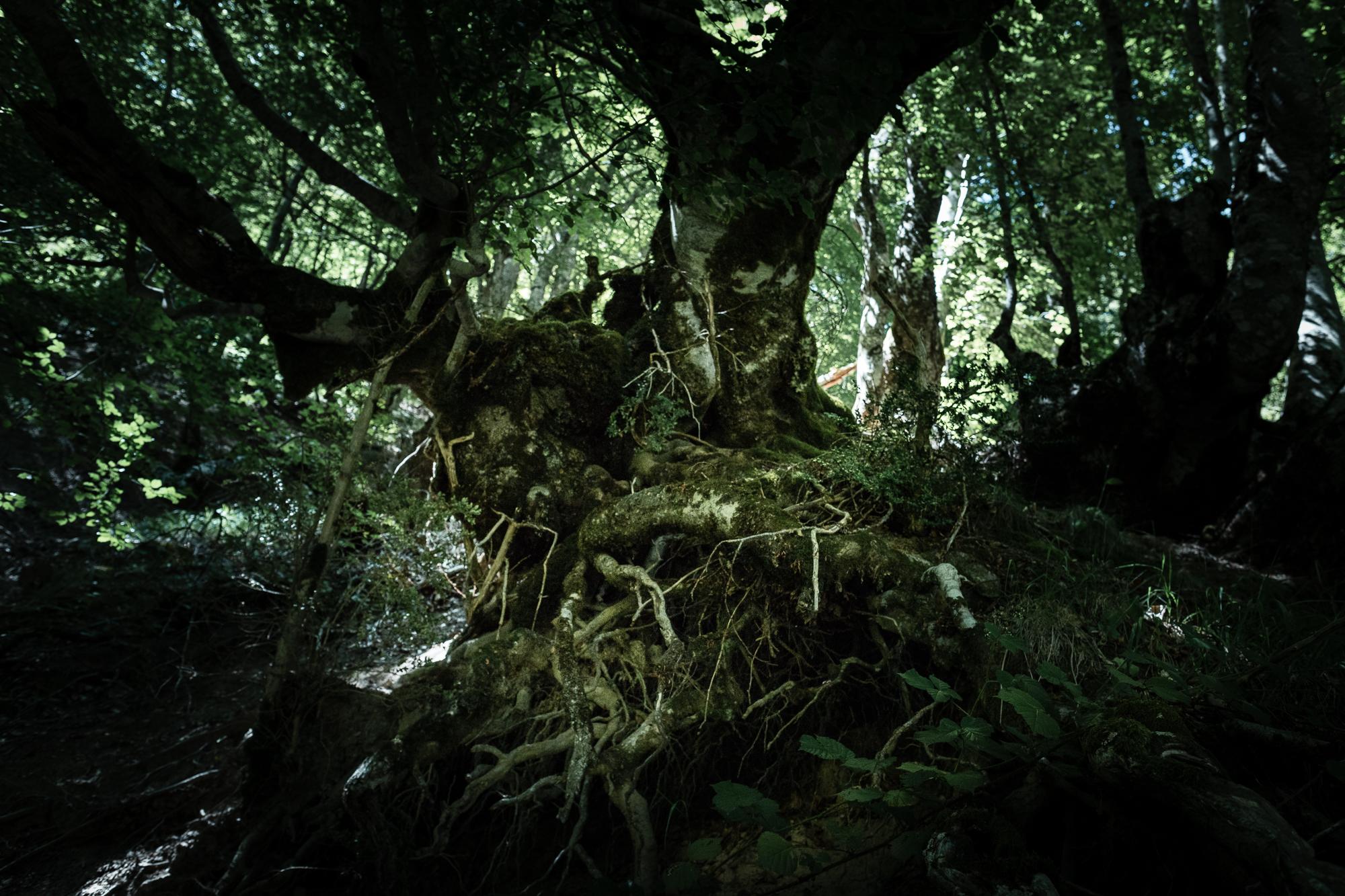 arbre torturé chemin de la mature