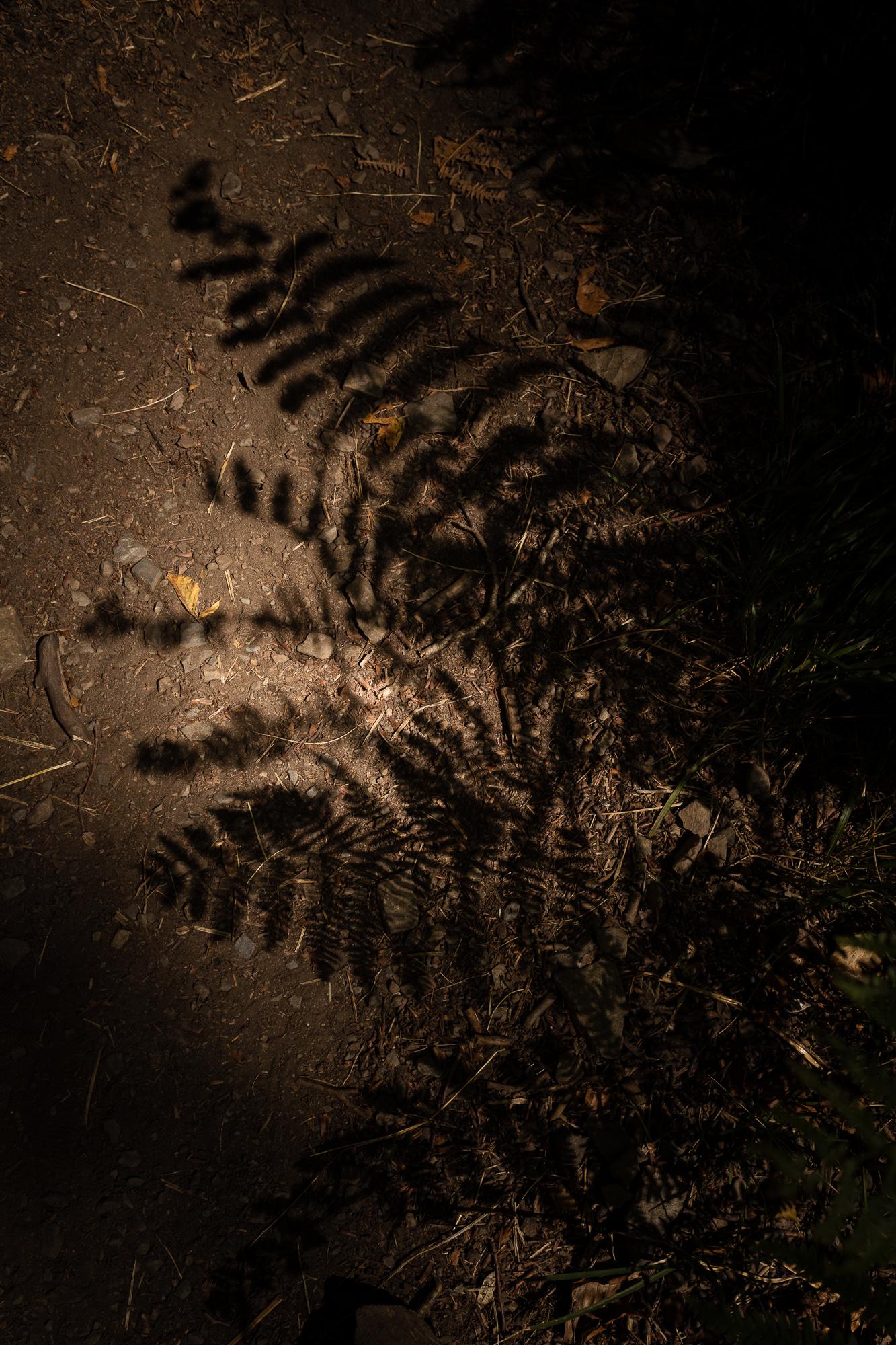 ombre fougère