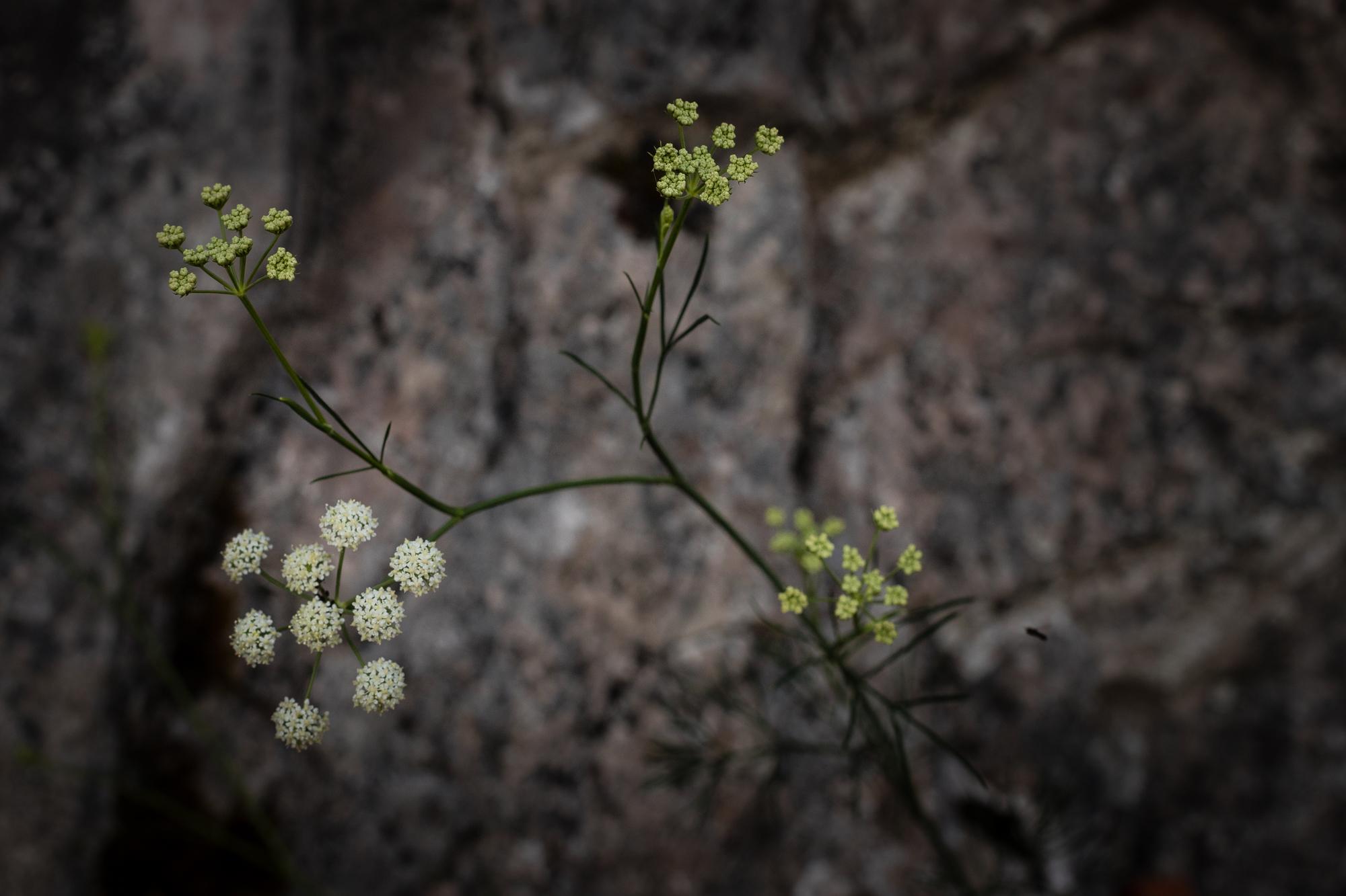 fleur rando chemin mature