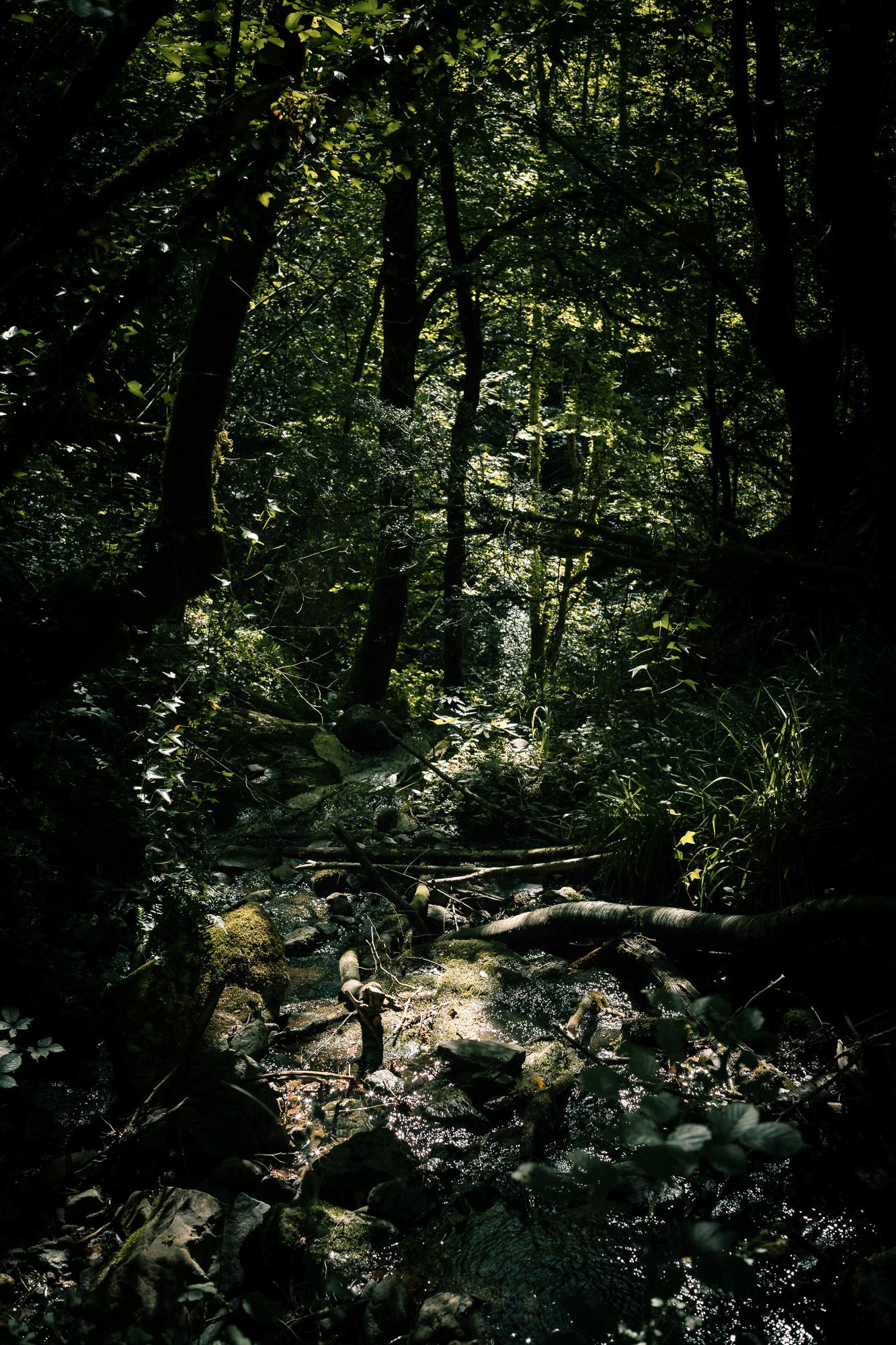 ruisseau sous-bois pyrénées
