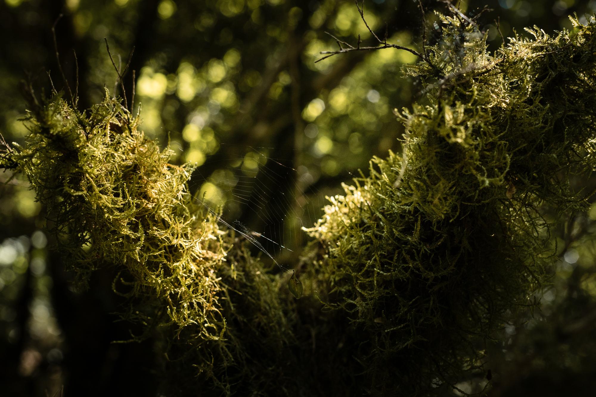 lichen sous-bois pyrénées