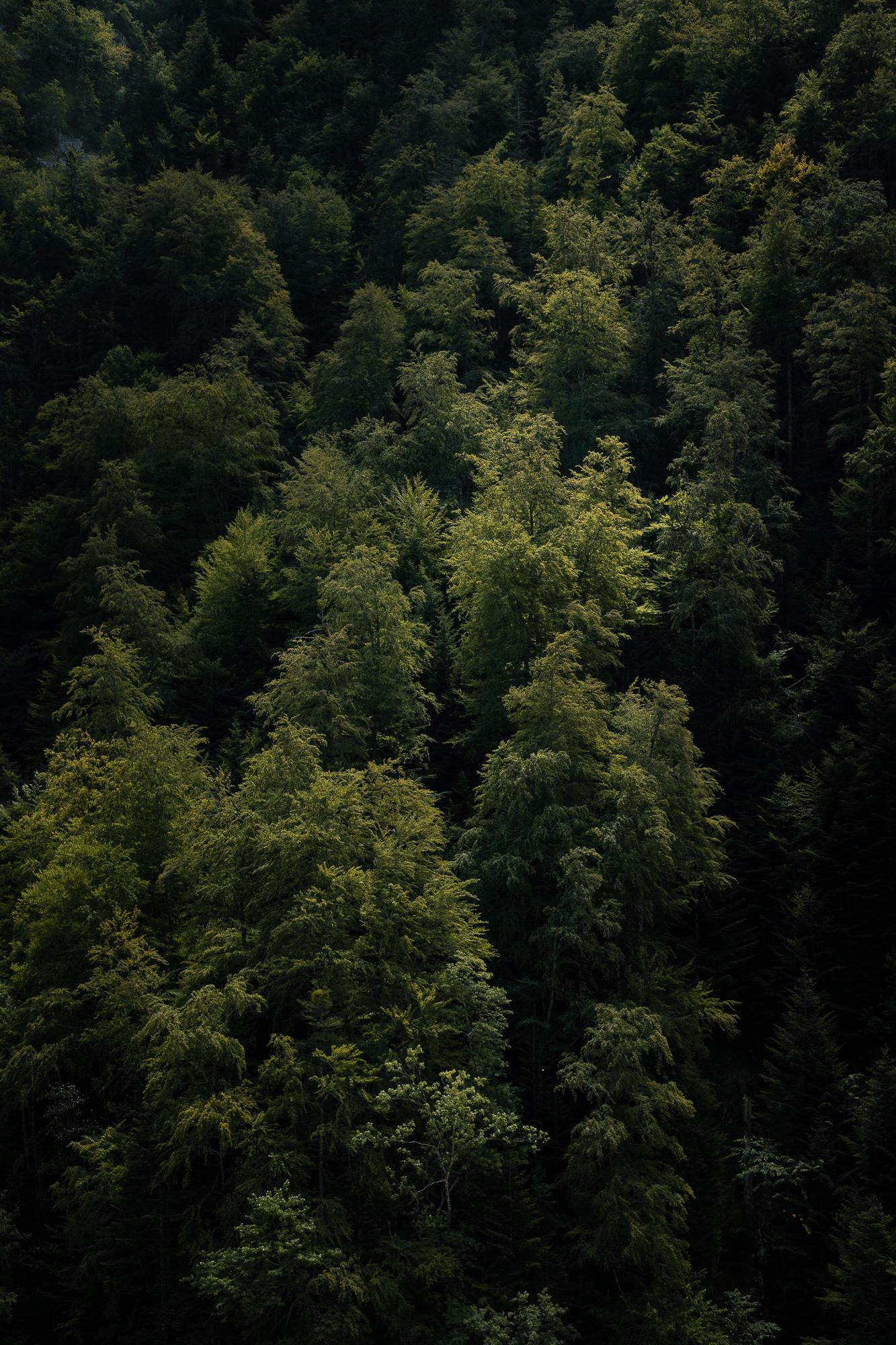 50 nuances de vert sapin